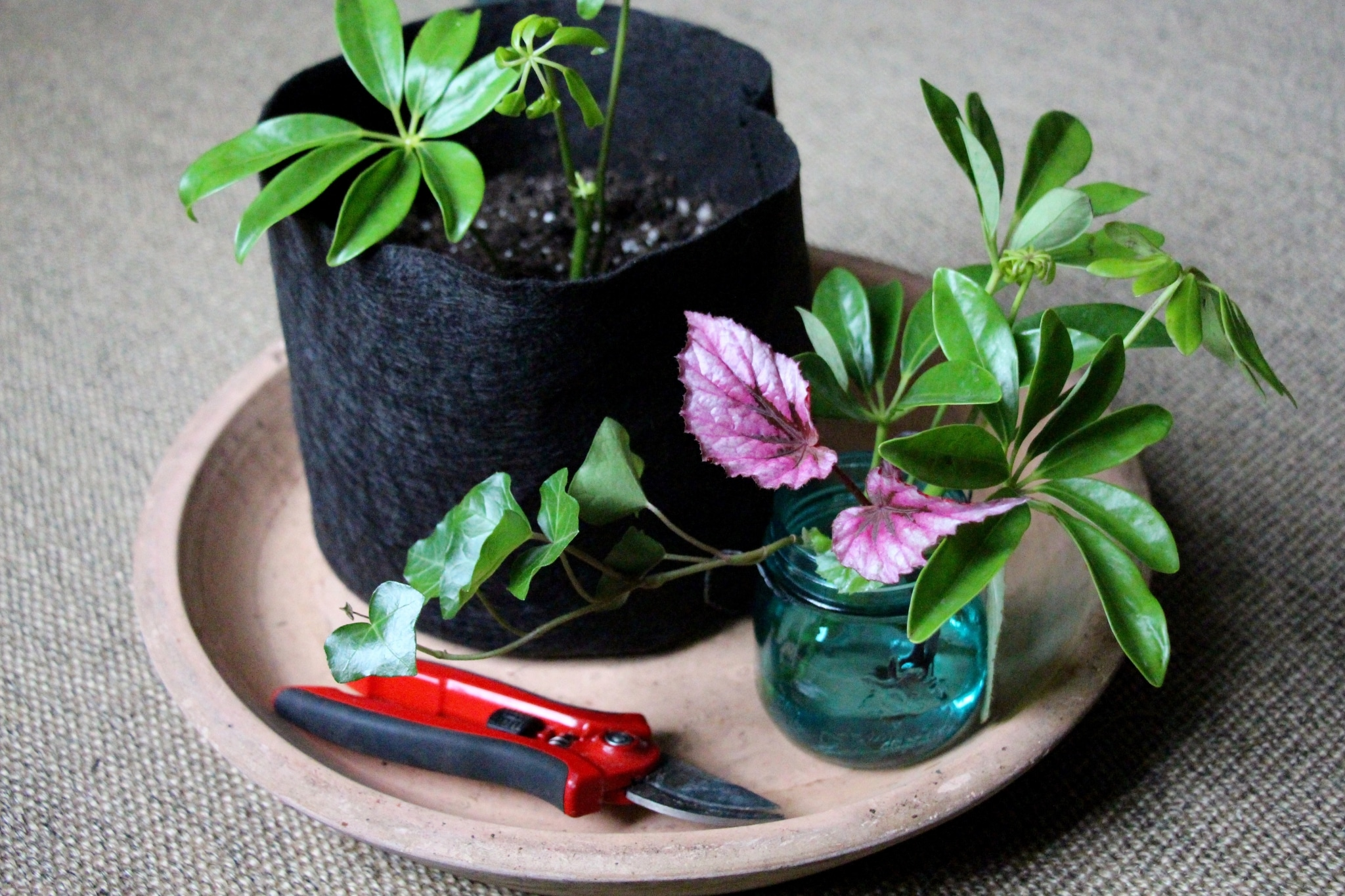 Каталог комнатных растений 66