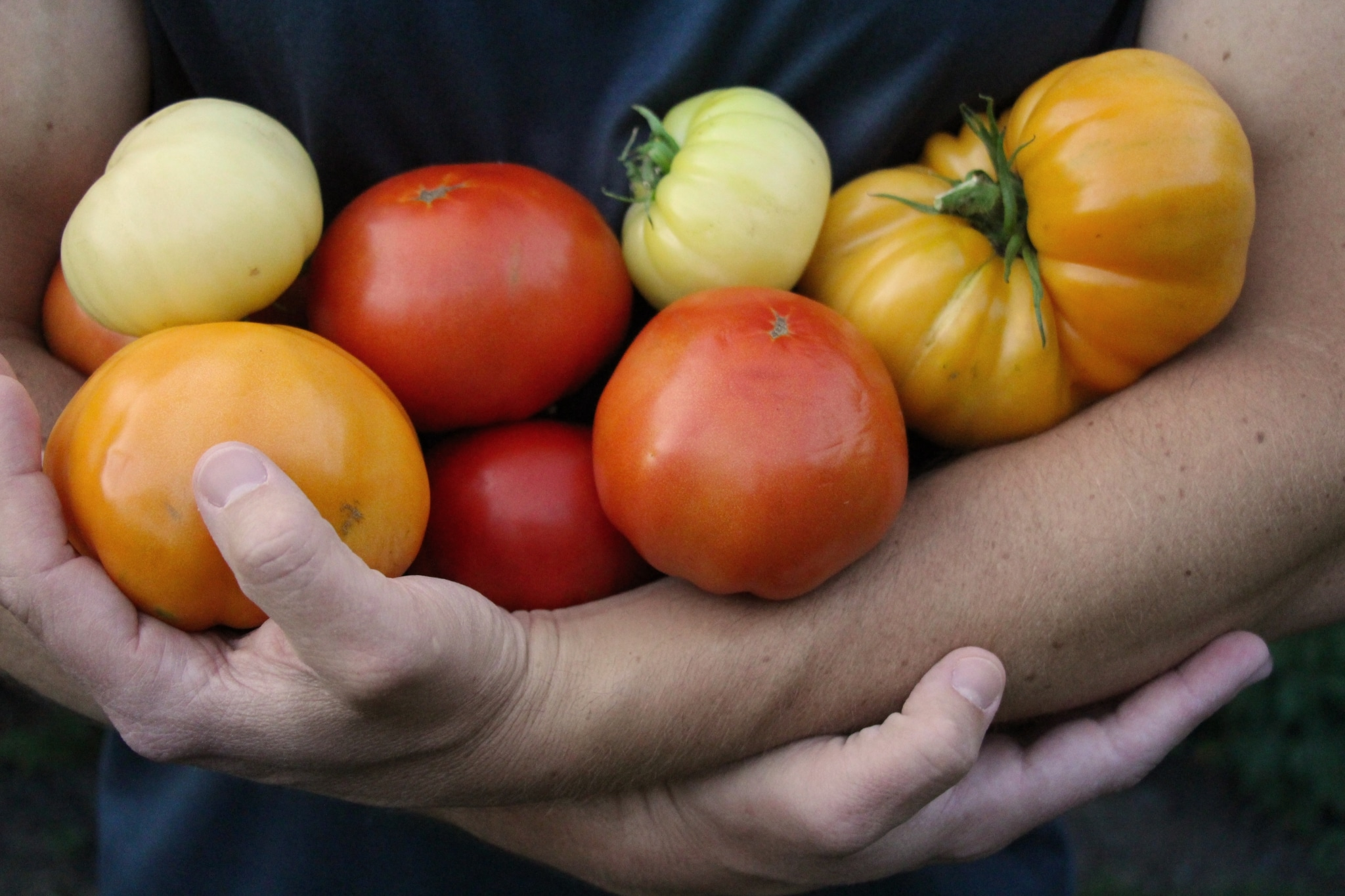 Grow Great Tomatoes With These Six Tips Smart Pot Blog