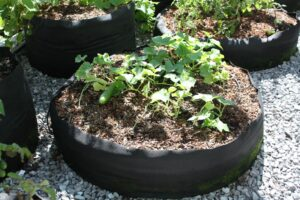 Success With Vine-Crops Starts with Smart Pots