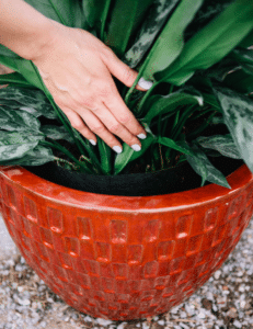 Container Planting Tips to Make the Most of Your Smart Pots