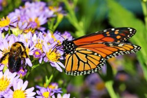 Be One in a Million:  Simple Steps to Protect Pollinators with a Monarch Butterfly Garden!