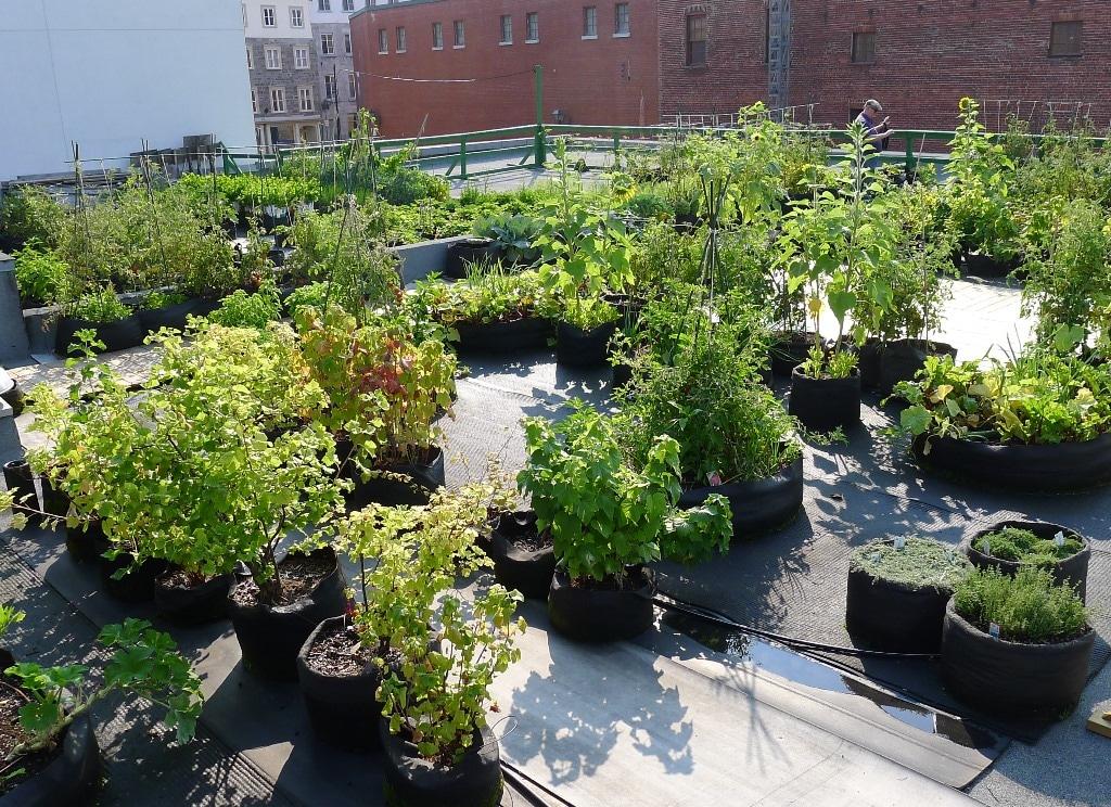 Smart Pot Garden